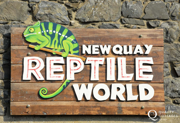 Newquay reptile world, a little zoo where you can see reptiles from all corners of the globe