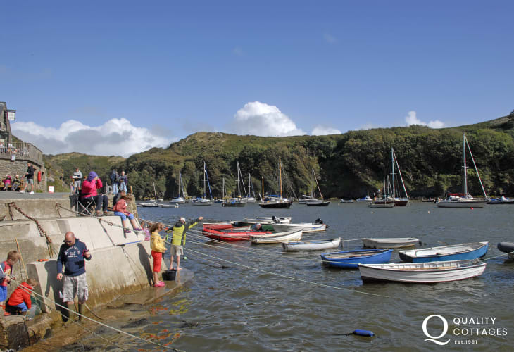 Solva Harbour is the best place around for doing some crabbing off the wall