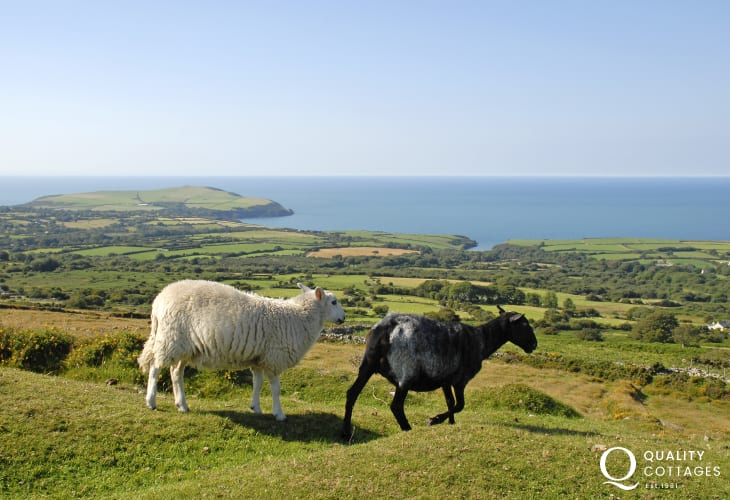 Choose walking on the Pembrokeshire Coast Path or up in the wild Preselli Hills - both wonderful places to escape the mad rush of the modern world