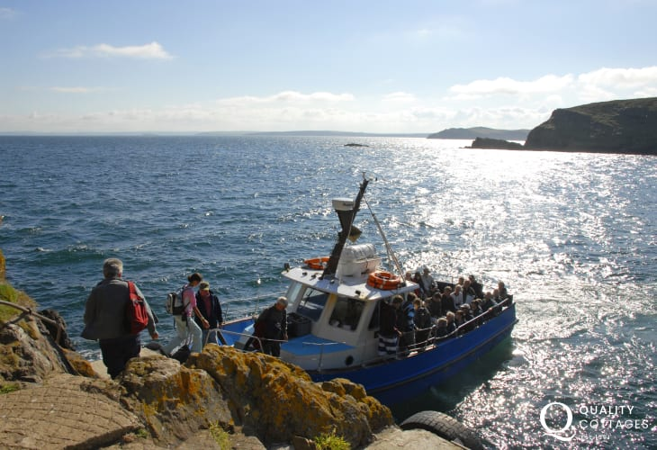 For a truly memorable holiday experience take the short boat trip over to Skomer island (RSPB Nature Reserve) aboard the Dale Princess from Martin's Haven