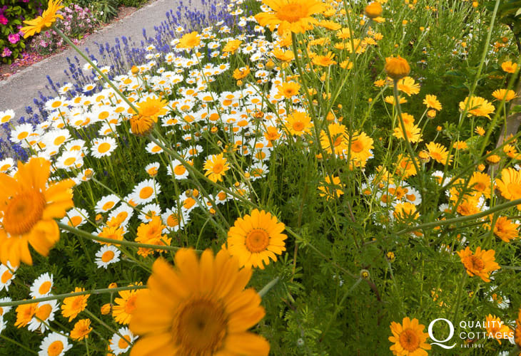 Take a relaxing stroll around the Cowbridge Physic Garden - a fascinating insight into the curative properties of plants and a haven of peace and tranquility.