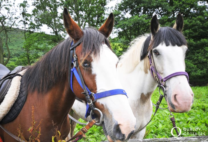 Explore the Lleyn by horseback from one of the many riding stables on the Lleyn
