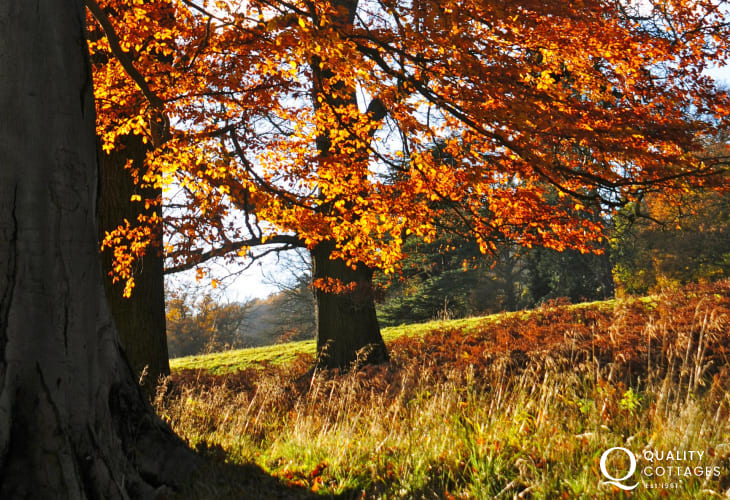 Explore the woodland walks in the area, anytime of year
