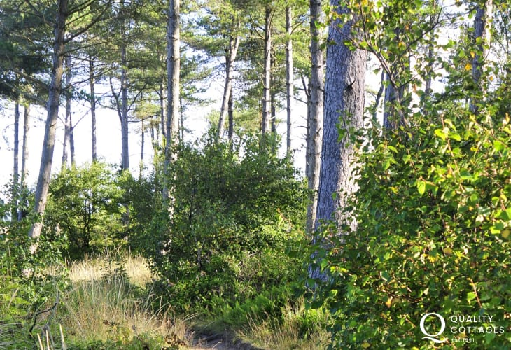 Walks through Newborough Forest Nature Reserve