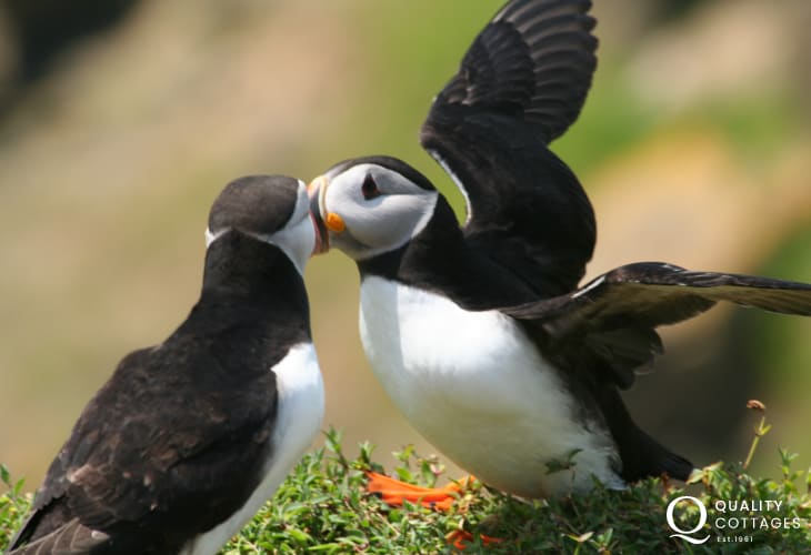 Catch a glimpse of gannets, porpoises, dolphins, whales and puffins