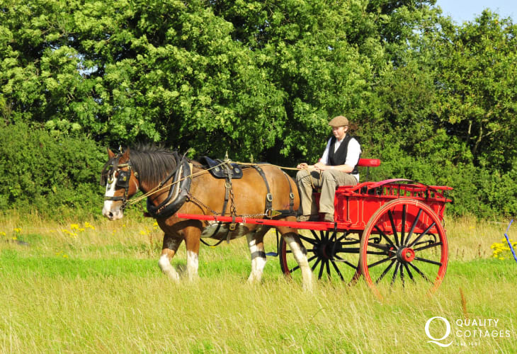 Dyfed Shire Horse Farm for enjoyable family days out