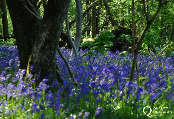 Explore Upton Castle's woodland trails, bluebell  walk