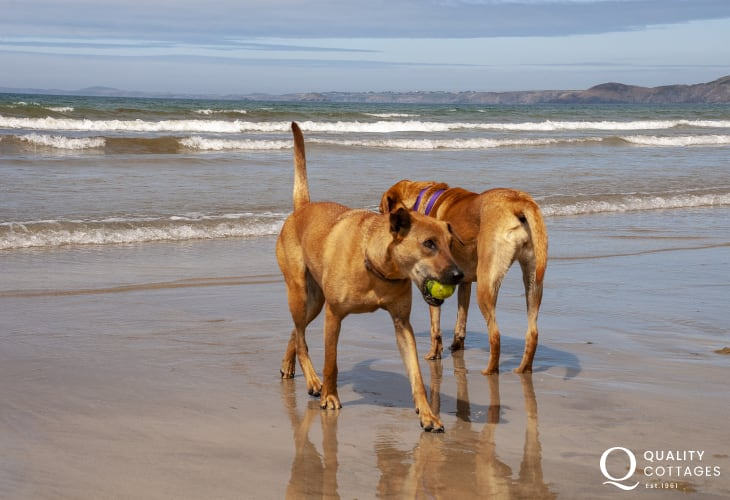 On Newgale Sands - many Quality Cottages welcome pets