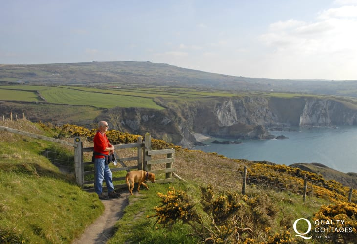 Walking the Pembrokeshire Coast Path near Dinas Head, Fishguard