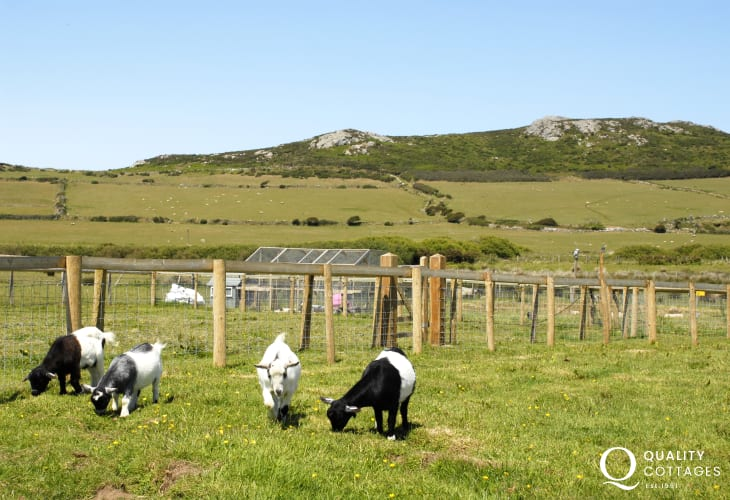 Children will love to visit the animals in the enclosures surrounding the farm