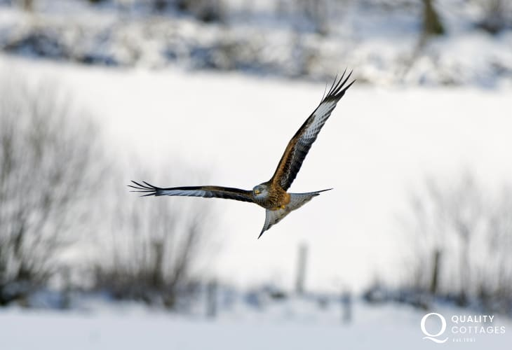 The Red Kite Centre