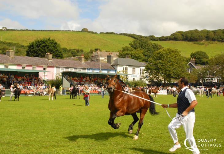 Aberaeron's 'Festival of Welsh Ponies & Cobs'