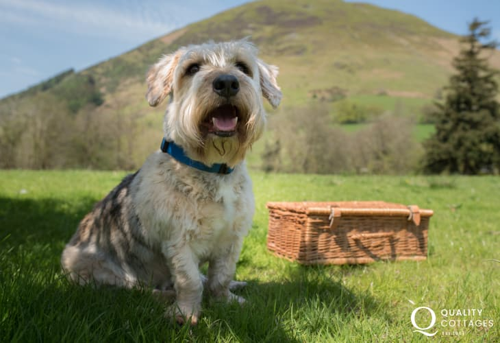 Enjoying the Welsh countryside - most Quality Cottages are dog friendly