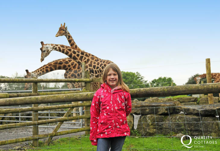 Folly Farm Zoo is a wonderful day out for all the family