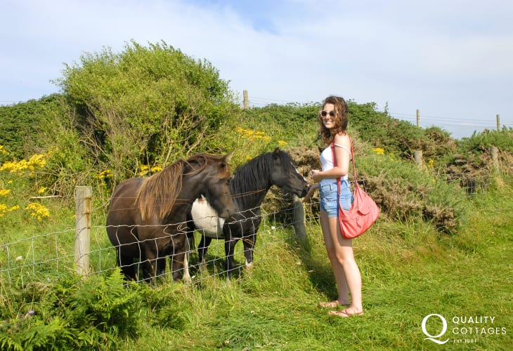 Cardigan Island Coastal Park Farm, Gwbert - lots of friendly animals and a large indoor play area