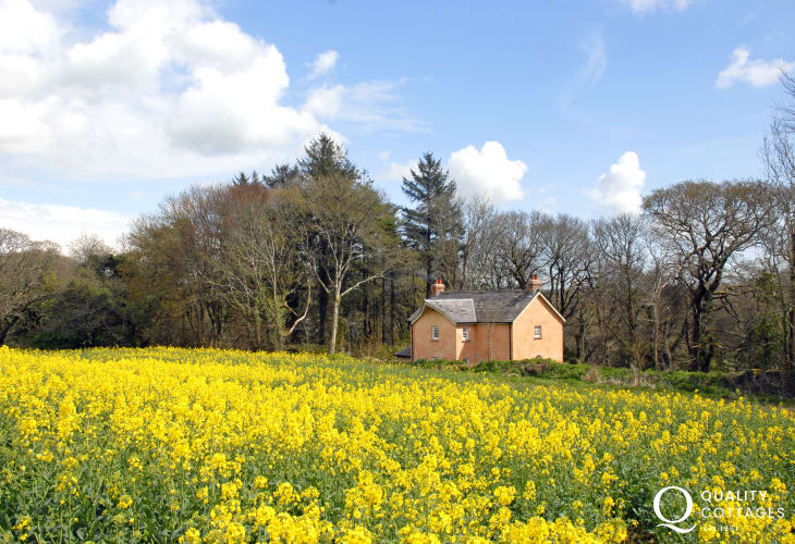 South Pembrokeshire woodland retreat holiday cottage - private gardens, pets welcome