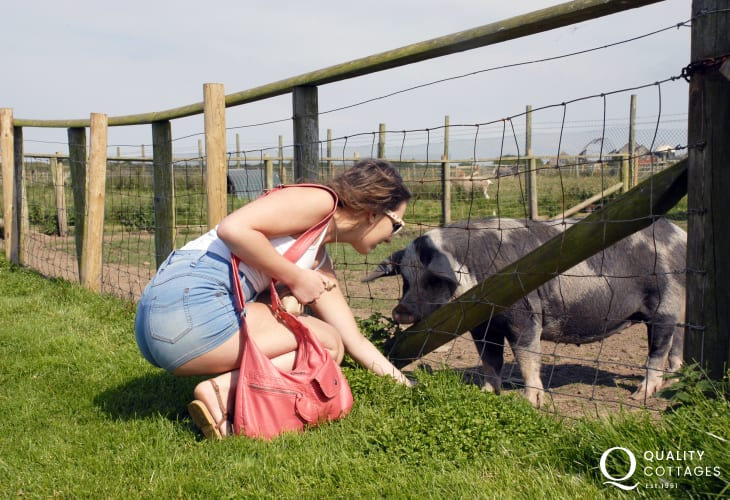 Cardigan Island Park Farm lovely family day out with pigs, goats, ponies and big indoor play area