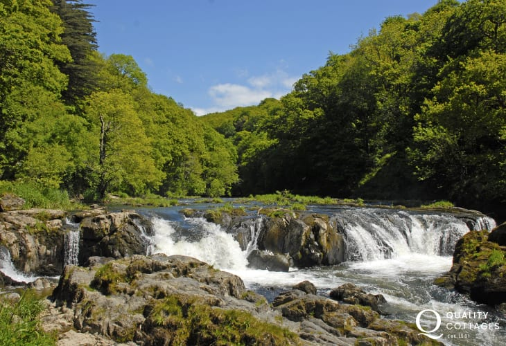 Watch the salmon leap Cenarth Falls on the River Teifi in September