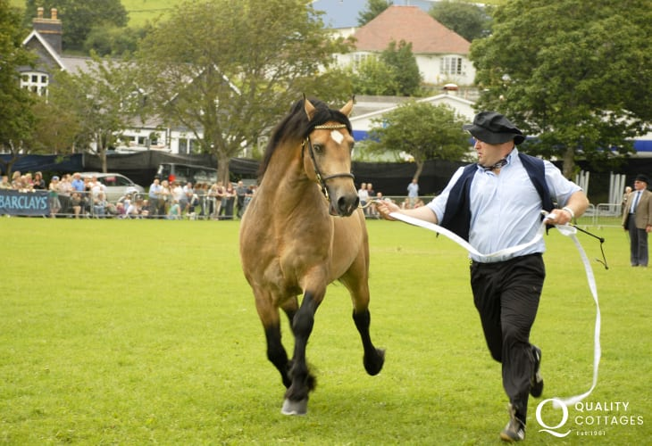 The Festival of Welsh Cobs in Aberaeron is just one of numerous summer shows that take place
