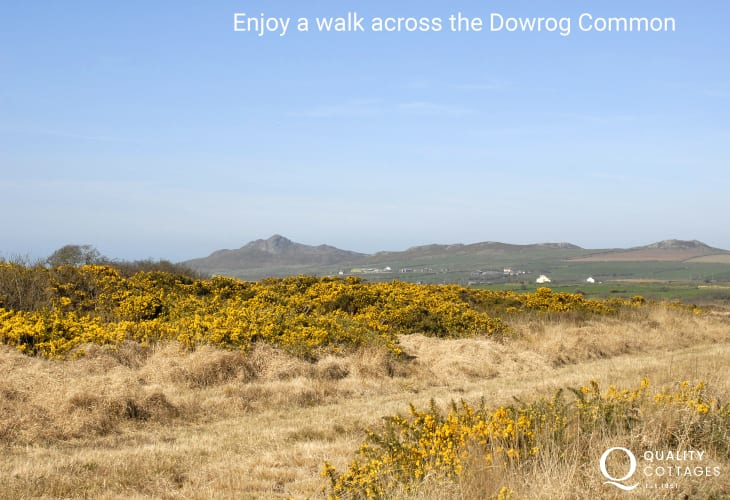 Dowrog Common (SSSI) – is a great place to spot all kinds of wildfowl, birds of prey, butterflies, dragonflies and wildflowers