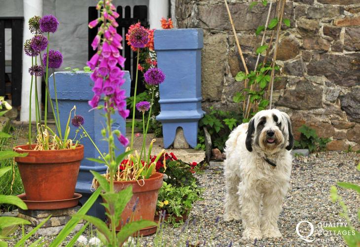 Llandwrog holiday cottage - garden