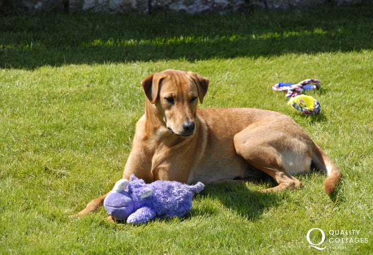 Enjoying her toy in the gardens at Llys Ischa