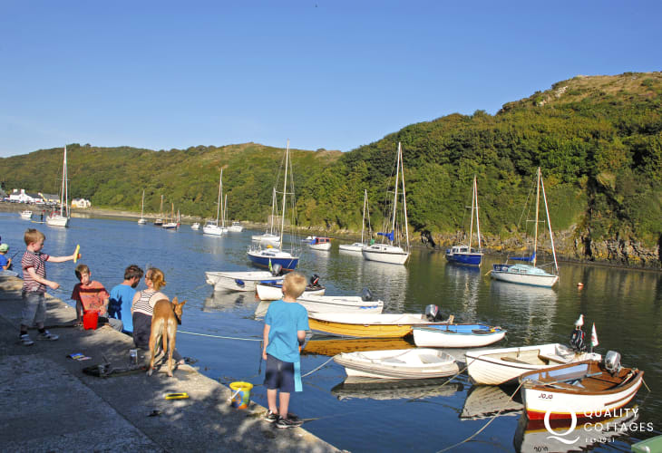 Head to Solva Harbour at high tide - a great spot for 'crabbing' off the wall