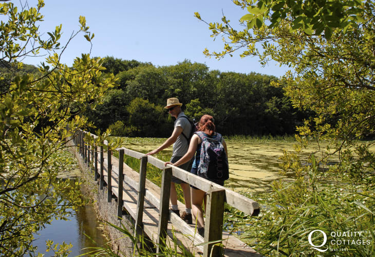 Bosherston Lilly Ponds - a National Nature Reserve