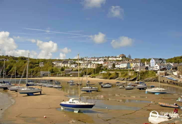 New Quay is a bustling seaside town