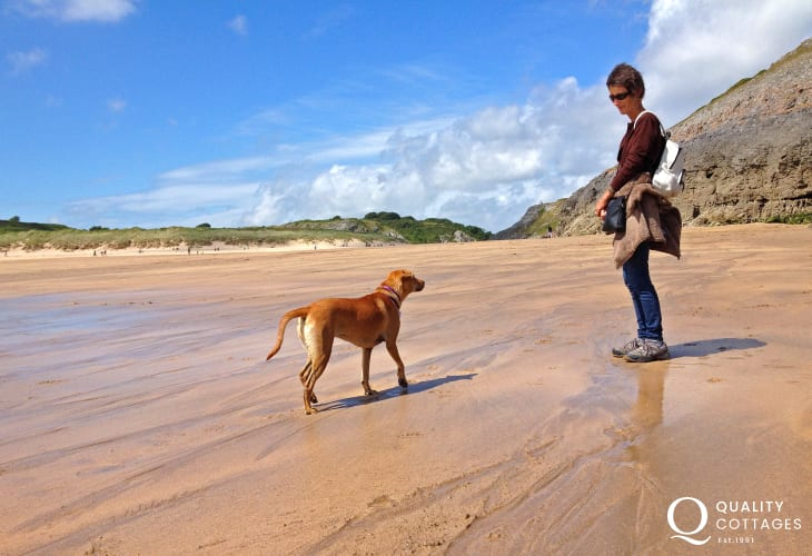 Broad Haven South (N.T) - a fabulous dog friendly beach