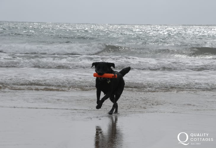 'Poppy' enjoying the waves!