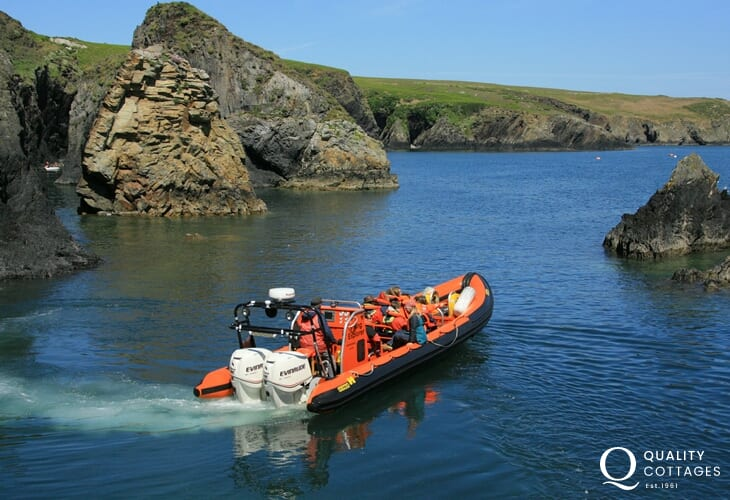 Book a boat trip to the wild offshore islands of Ramsey, Grassholm, Skomer and Skokholm