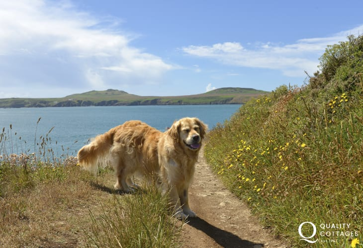 On the Coast Path at St Justinians - most Quality Cottages are dog friendly