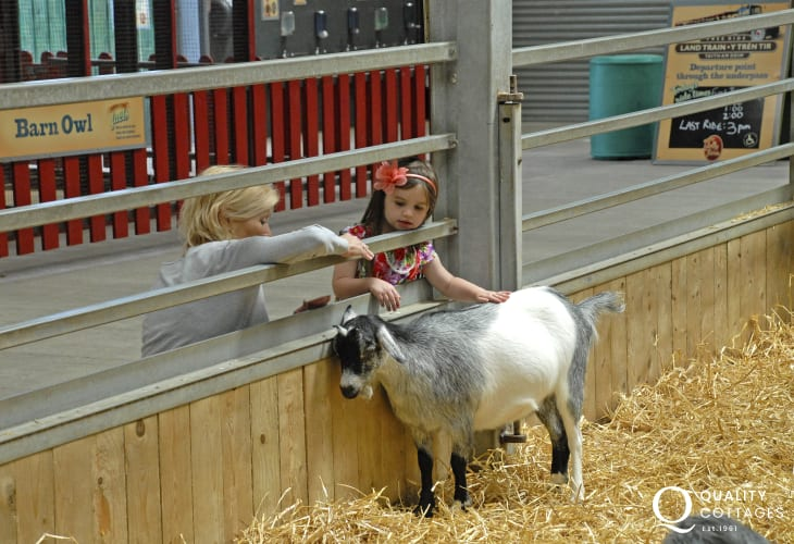 Folly Farm is just one of a variety of family attractions