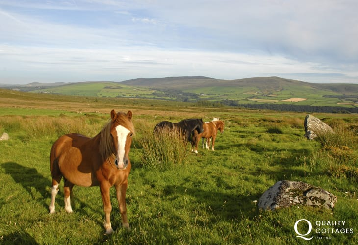 Preseli Hills - a wild, rolling patchwork of moor, heath, grasslands with wild ponies and ancient relics