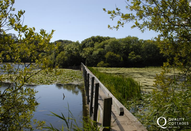 Bosherton Lily Pond is a short drive away and a lovely walk down to Broad Haven South