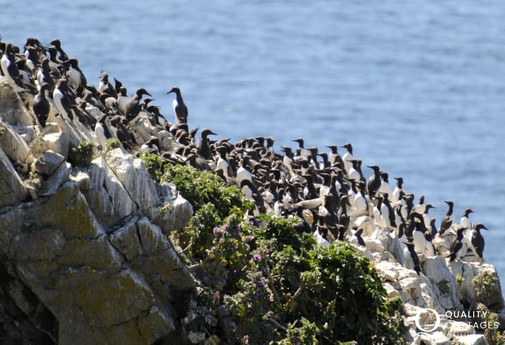 Seabirds at nearby Stack Rocks, perfect spot for birdwatching