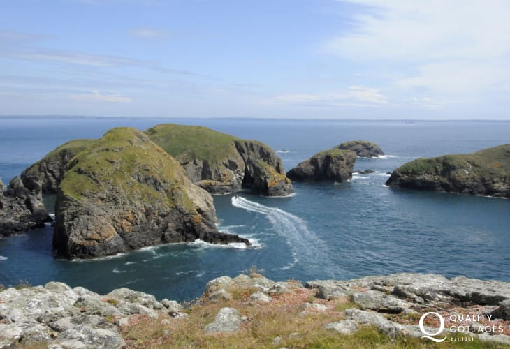 Visit Ramsey island on a boat trip from St Justinians