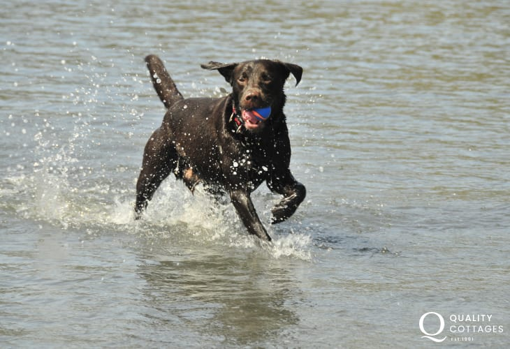 Enjoying the sea - most Quality Cottages welcome pets