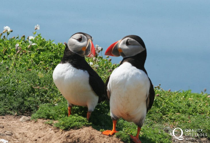 Skomer, Skokholm, Ramsey and Grassholm Islands are famous for their natural beauty and fantastic array of wildlife