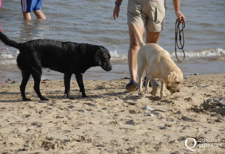 Enjoying the beach - most of our holiday cottages welcome your dogs