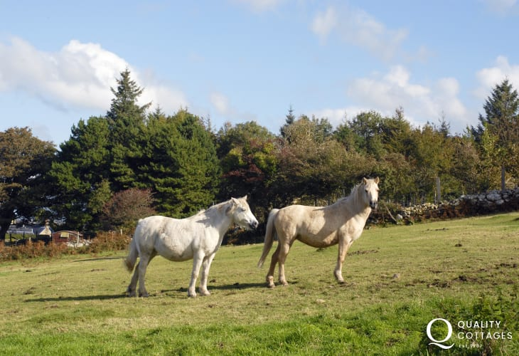 'Toffee' and 'Caroline' enjoying summer sun in the field next to the cottage