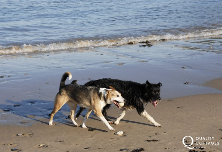 Enjoying the beach - most Quality Cottage welcomes dogs