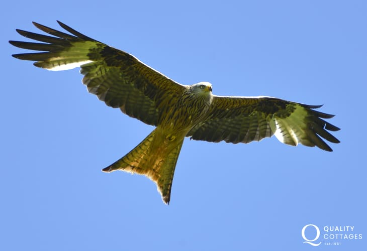 Watch for Red Kites soaring above the surrounding countryside