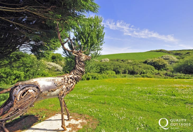 Stag overlooking gardens at holiday cottage Wales