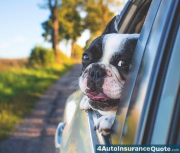 pet car insurance coverage