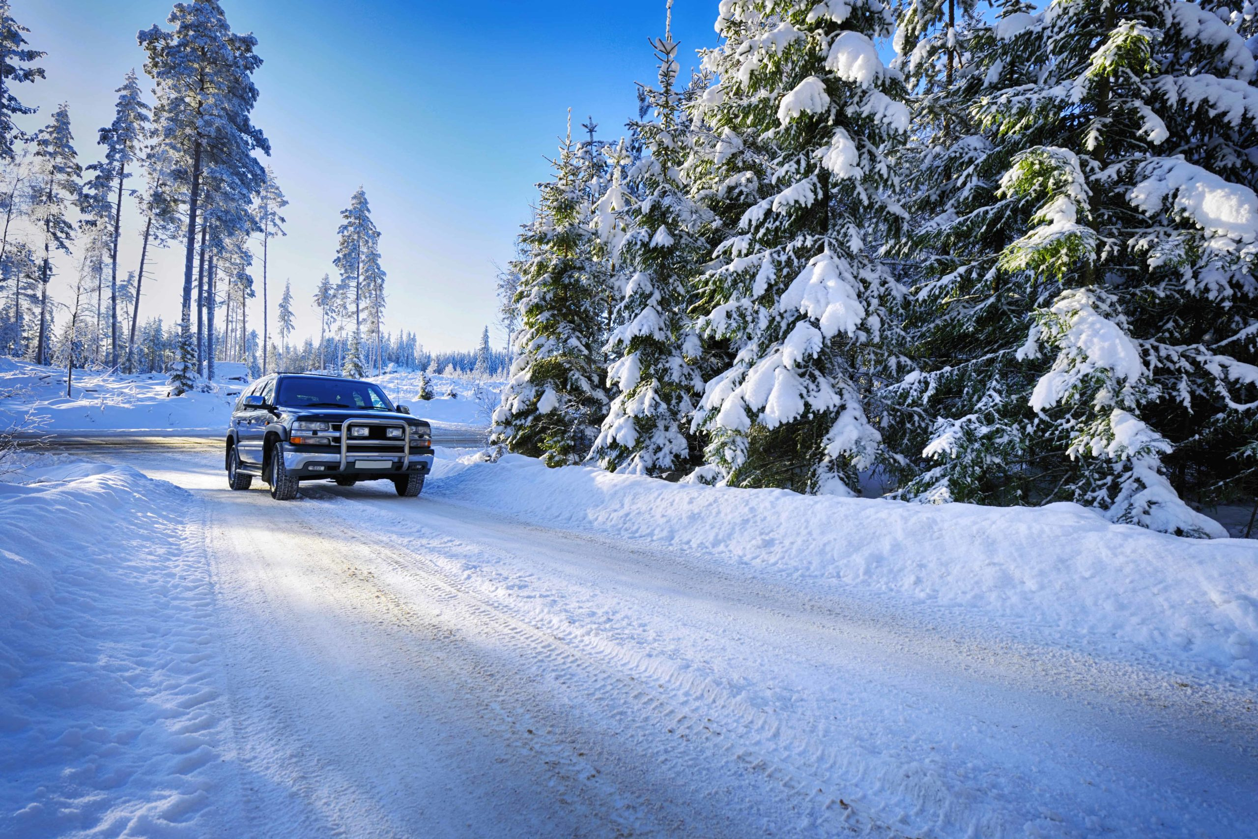SUV driving on snowy road surrounded by pines in winter