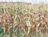 Will Drought, Failure of Corn Crops Lead to Higher Gas Prices?