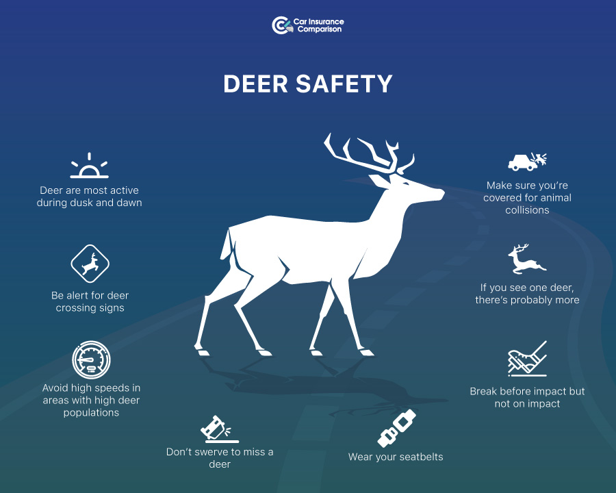 Driving Safety Tips (Areas with Deer)