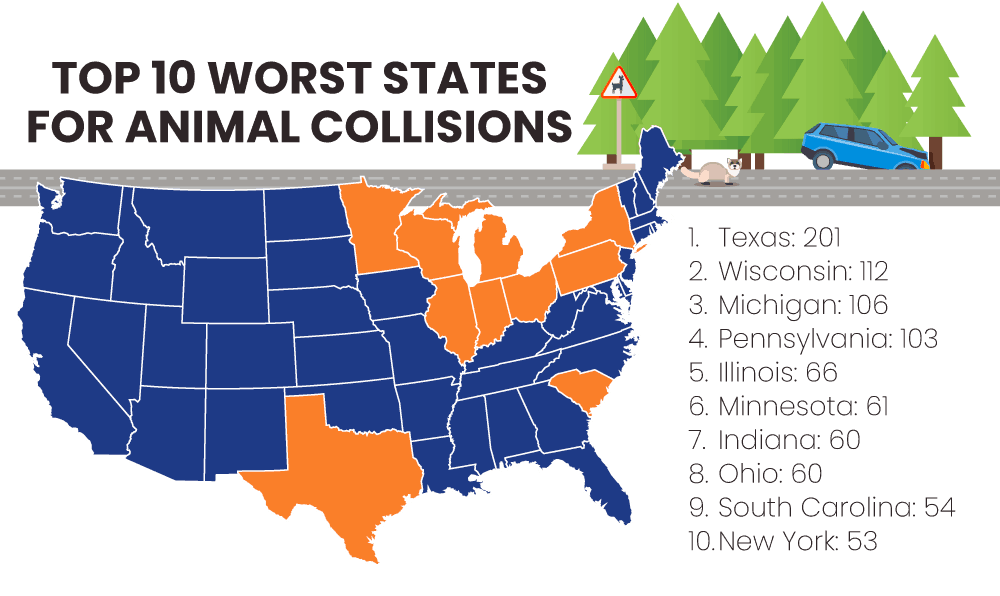 top states for animal collisions